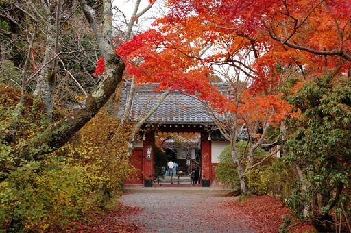 『京都賞楓』特別收錄夜楓景點!